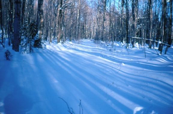 rwp-winter-02