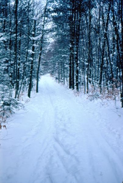 rwp-winter-08