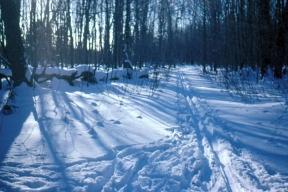rwp-winter-11