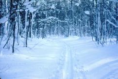 rwp-winter-18