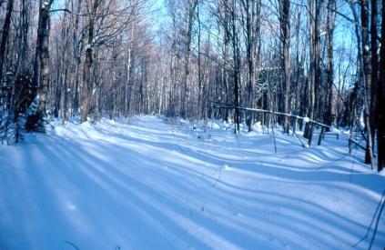 rwp-winter-28