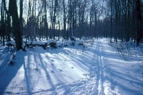 rwp-winter-29